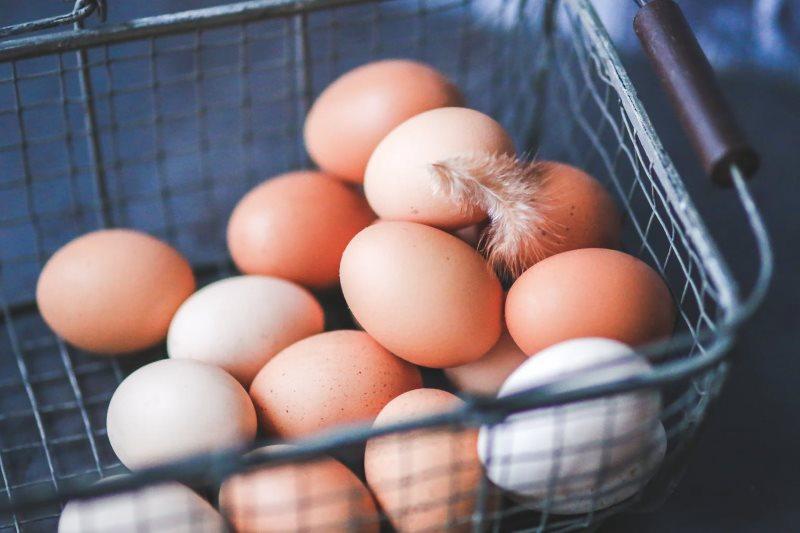 Broedeieren kopen van de kippenfokker
